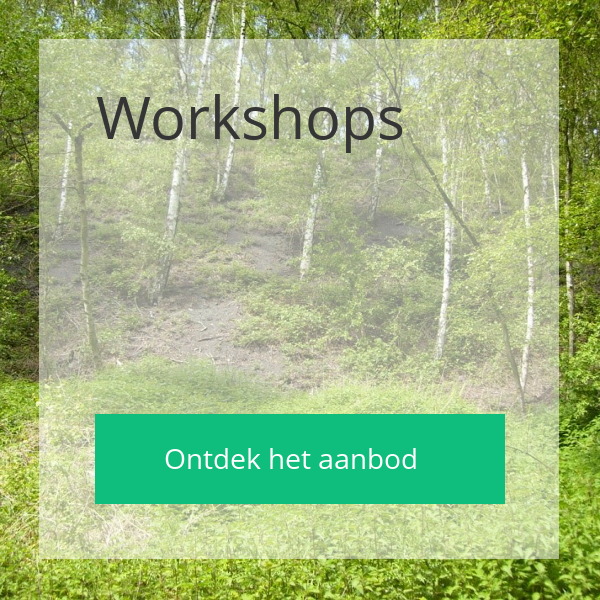 Ann De Schepper - Workshops